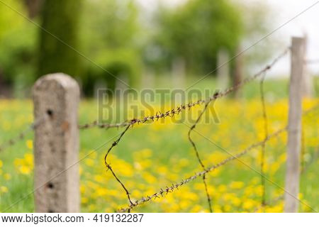 Barbed Wire In The Spring Landscape. Against The Background Of A Blurred Meadow With Dandelions Stan