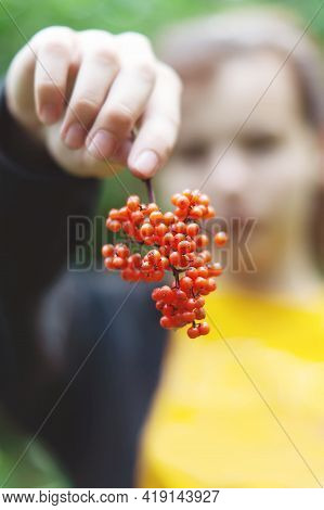 A Bunch Of Red Mountain Ash In The Hand Of An Unrecognizable Young Girl. A Bunch Of Rowan Berries In