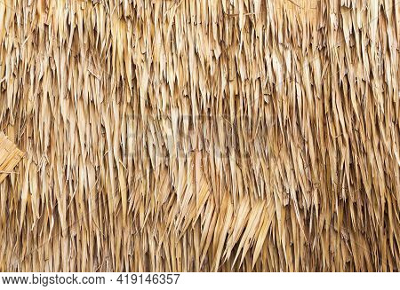 Thatched Wall Background Or Patterns. Dry Straw Hay Or Grass Thatched As A Wall.