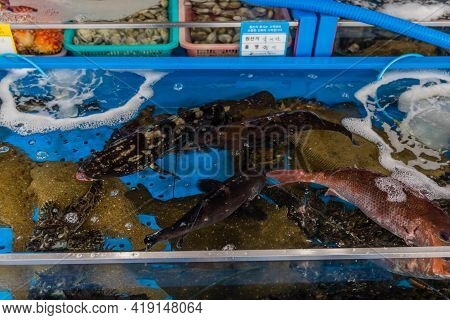 Daecheon, South Korea; April 25, 2021: Water Tank Filled With An Assortment Of Fish For Sale At Seap