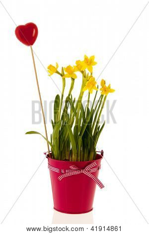 Yellow daffodils in pink bucket with ribbon and bow and red heart
