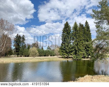 Early Spring In A Forest Park Area, Trees Without Leaves, Tall Green Christmas Trees, Yellow Grass A
