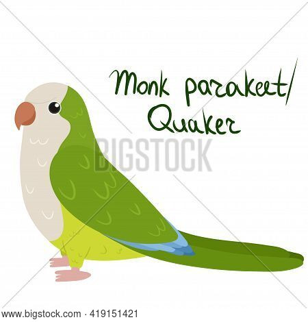 Monk Parakeet Or Quaker Parrot In Cartoon Style On White Background. Vector Hand Drawn Illustration.