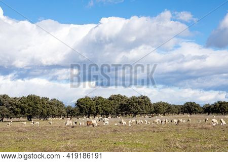 Sheeps grazing on the meadow with a amazing clouds