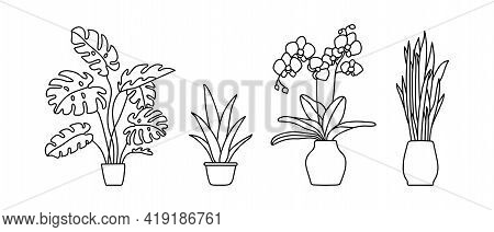 Indoor Plant In A Pot. Monstera, Philodendron, Scarlet, Orchid And Snake Plant. Black And White Sket