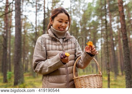 picking season, leisure and people concept - young asian woman with basket and chanterelle mushrooms in autumn forest