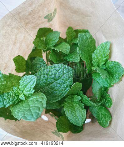 Mint. Closeup Of Fresh Green Mint Leaves