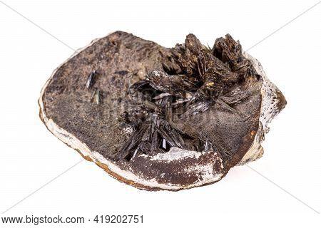 Macro Stone Vivianite Mineral On White Background Close Up