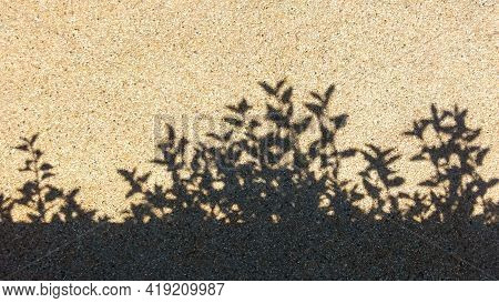 The Shadow Of Bush On The Rocky Ground