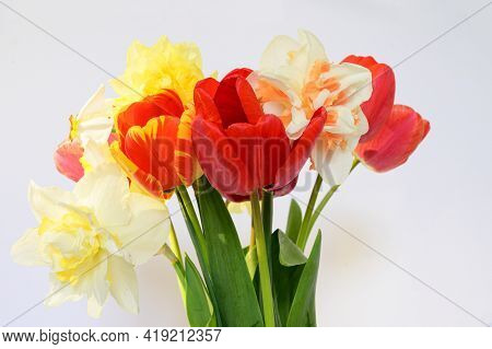 Very Nice Colorful Spring Flower Close Up