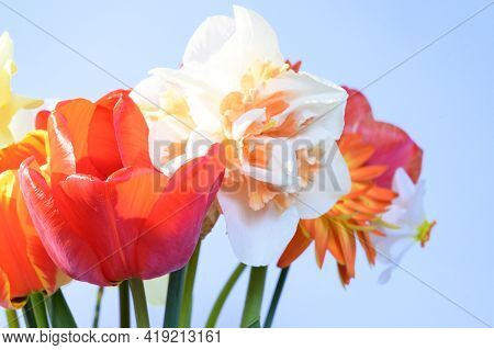 Very Nice Colorful Spring Colorful Flower Bouquet