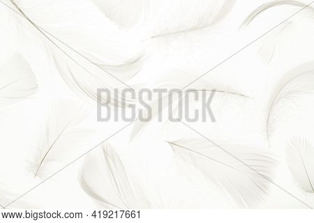 Feather Pattern Concept. Multicoloured Pastel Angel Feather Closeup Texture On White Background In M