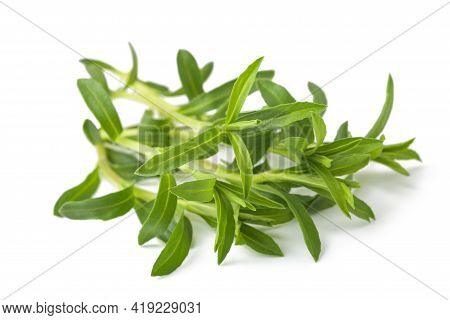 Summer Savory Bunch Isolated On White Background