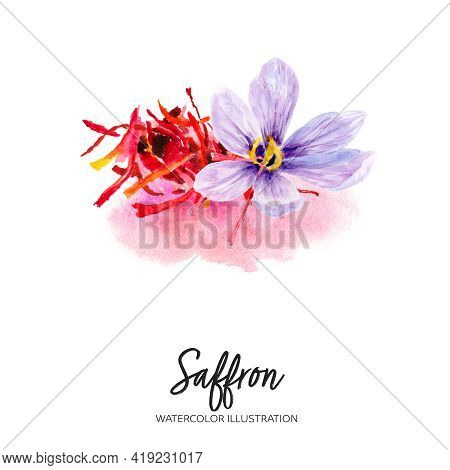 Saffron Watercolor Illustration Isolated On Splash Background