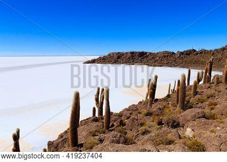 Salar De Uyuni View From Isla Incahuasi