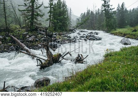 Colorful Rainy Landscape With Fallen Tree Trunk In Powerful Mountain River In Heavy Rain. Turbulent