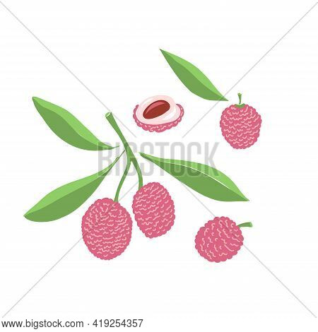 Lychee Set. Whole, Half, Seed, Leaves. Colorful Sketch Collection Of Tropical Fruits Isolated On Whi