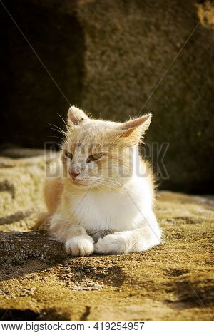 Photo Of A Street Cat On A Rock, Solar Photo, Selective Focus. High Quality Photo