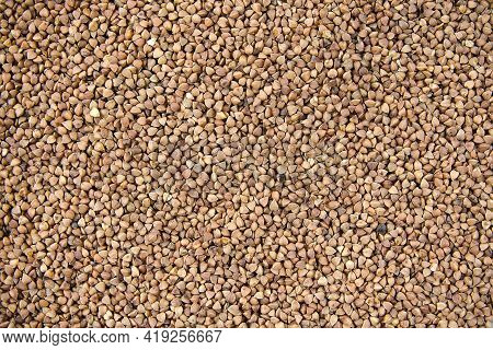 Buckwheat Groats Sprinkled Close Up  Food Background