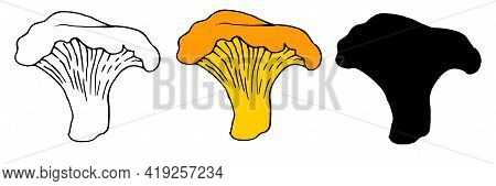 Vector Set Of Orange-colored Edible Chanterelle Mushrooms With A Black Outline On A White Background