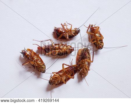 Several Dead Cockroaches Hit The White Background Picture.
