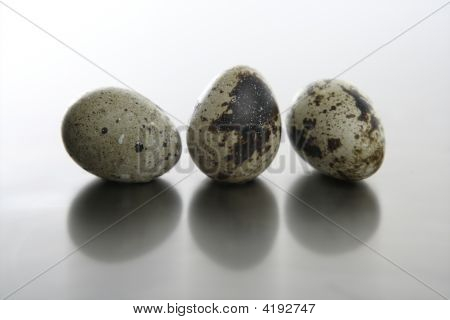 Three quail bird eggs simple composition risk to be broken poster
