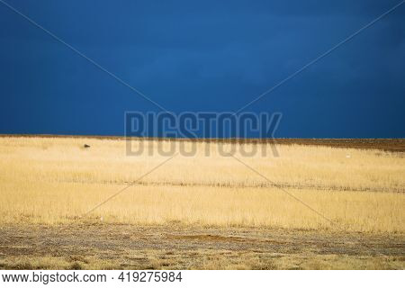 Rural Grasslands On A Windswept Landscape Surrounded By Thunderstorms With Heavy Rain Taken At A Pra