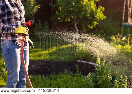 Close-up Of Female Gardener In Work Clothes Watering The Beds In Her Vegetable Garden On Sunny Warm