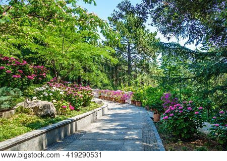 Summer Alley In Urban Park Among Blooming Flowers & Trees. Shot In Urban Park Paradise (sanatorium A