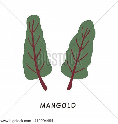 Natural Organic Mangold Plant Leaves Vector Illustration. Simple Flat Colored Chard Ingredient In Do