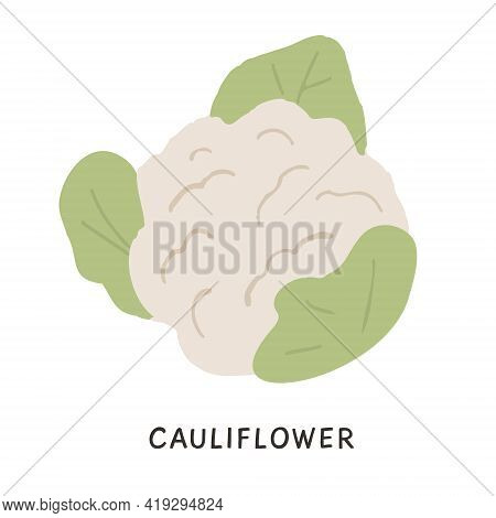 Organic Raw Cauliflower In Flat Style. Natural Ripe Whole Cabbage Vector Illustration. Seasonal Vege