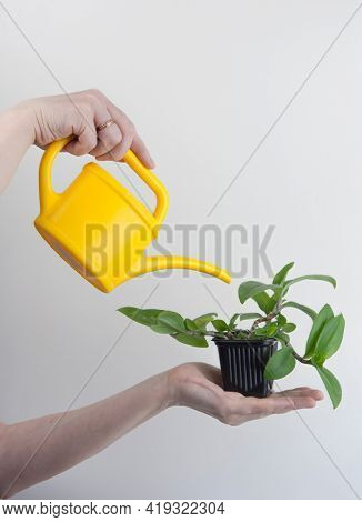 Hand holding plastic watering can and flowers in pot on a white background. a woman's hand sprays flowers in a pot. Woman hands with watering can  in hand. Copy space