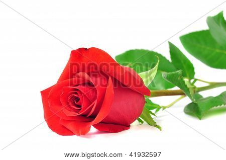 Red Rose Isolated On A White Background, Romance