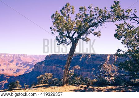 Moody Atmosphere At Grand Canyon National Park. Tree In Foreground.