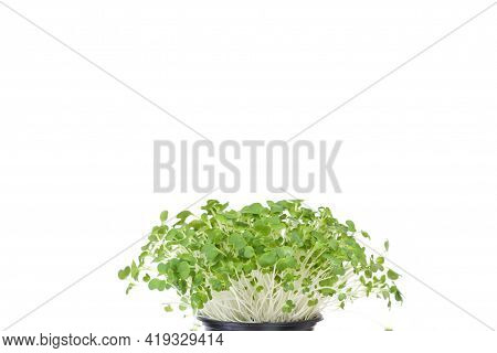 Bok Choy Micro Greens In Black Pot Isolated On White Background With Copy Space. Micro Green Arugula