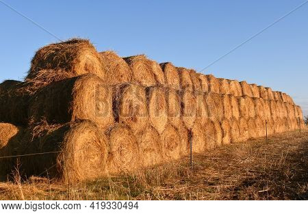 A Long Row Of Round Hay Bales  Stacked In Three Tiers Receive The Early Morning Sun Rays.