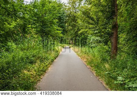 Asphalted Bike Path Through A Forest. Path Between Trees In Spring With Deciduous Trees And Bushes.
