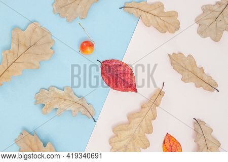 Autumn Composition. Pattern Made Of Autumn Leaves, Acorn, Pine Cones On Blue Background. Flat Lay, T