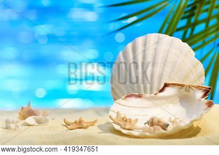Pectinida Seashell, Starfish And Other Saltwater Clams On The White Sand Beach. Coastal Landscape On