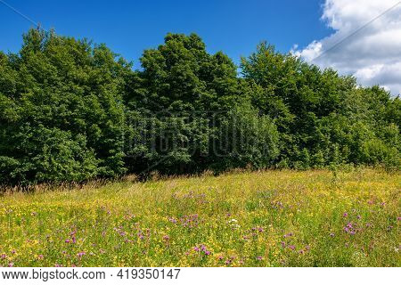 Grassy Glade Among The Beech Forest. Sunny Nature Scenery In Summertime. Landscape With Fluffy Cloud