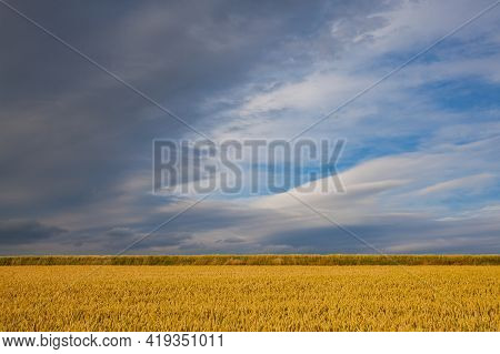 Summer Evening Landscape With Wheat Field In Central Bohemian Uplands, Czech Republic.