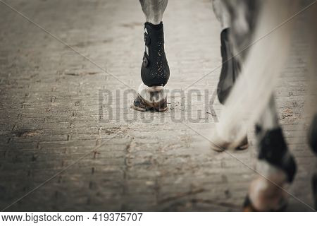 Feet Running Sports Gray Horse. Legs Of A Sporting Savvy Horse In Knee-caps