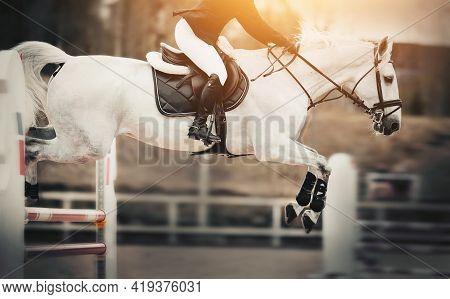 The White Horse Overcomes An Obstacle. Equestrian Sport, Jumping. Overcome Obstacles. Dressage Of Ho