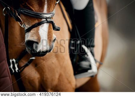 Equestrian Sport.nose Sports Red Horse In The Bridle.the Leg Of The Rider In The Stirrup, Riding On