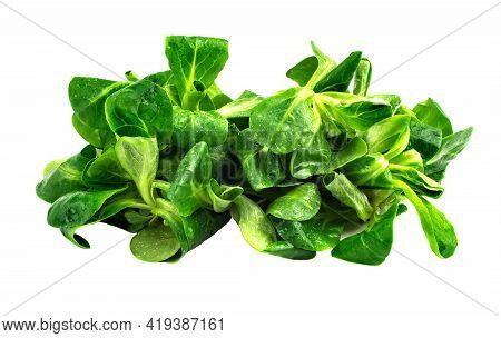 Mung Bean Salad Leaves, Corn Salad On A White Plate. Fresh Mix Of Green Washed Leaves (valerianella