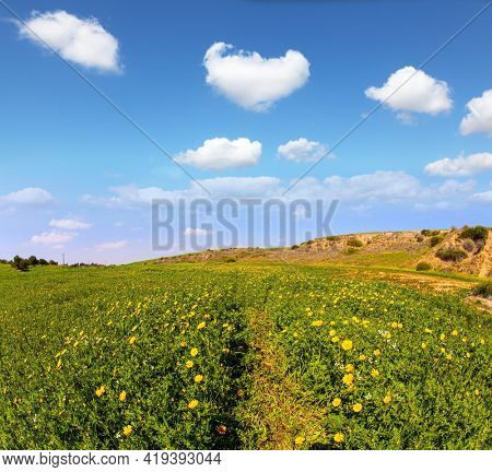 Magnificent blooming spring. Blooming Negev Desert in early spring. Israel in bloom. Fields of spring flowers in the bright southern sun. Blue sky and light spring clouds