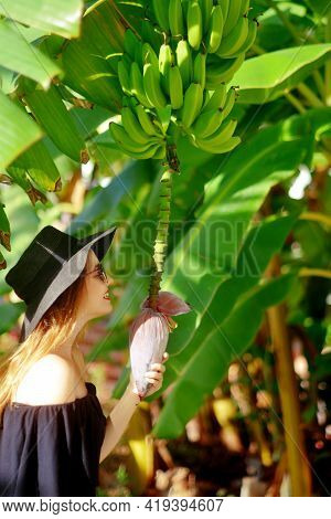 Girl Exploring The Nature - Examining Banana Tree, Flower And Fruits Growing On A Green Tree. Beauti