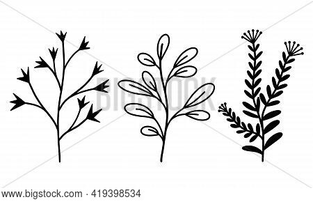 Collection Of Vector Botanical Elements Branches With Leaves And Grass. Herbs With Inflorescences An