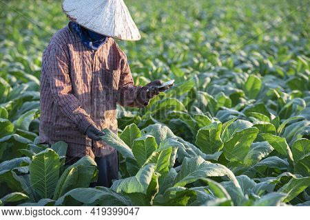 Tobacco Growers Use A Mobile-based Internet Master Data Network To Validate, Test And Select New Cro