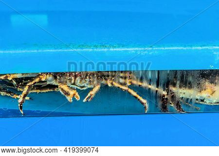 Live Giant Crab In Aquarium Tank For Sale At Seaport Open Market.